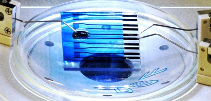 biosensor-could-detect-Parkinson-Alzheimer-and-cancer