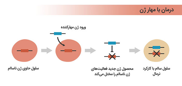 gene therapy inhibition yourgenome